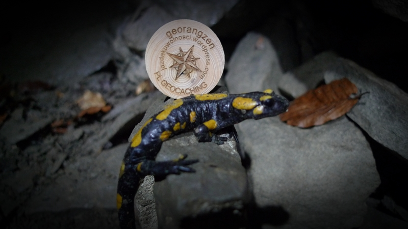 salamandra też czasem się tam dostaje